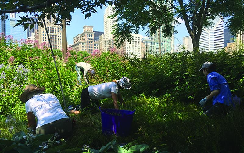 Lurie Garden Millenium Park GGN มิลเลเนียม พาร์ค จีจีเอ็น ลูรี่การ์เด้น